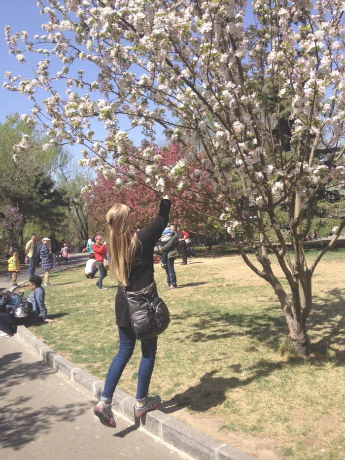 Sisu_plugga_utomlands_shanghai_utlandsstudier_cherryblossom